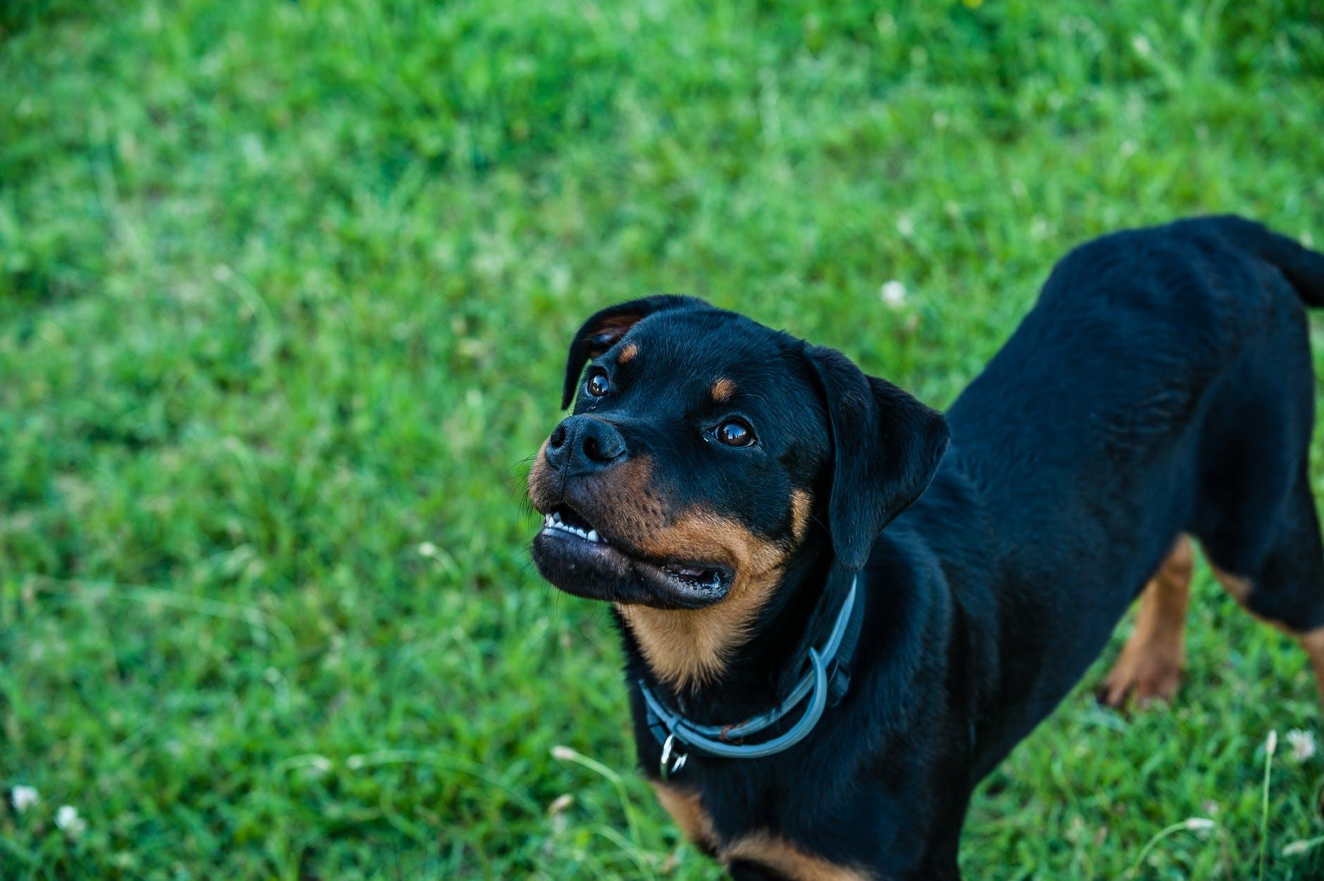 El Gobierno quiere cambiar la normativa sobre perros potencialmente peligrosos
